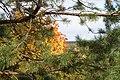 Autumn in Kirov. Russia. Осень в Кирове. Россия - panoramio.jpg
