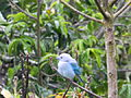 Aves de Calderas, Edo Barinas 1.JPG