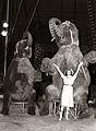 Avstrijski cirkus Medrano v Mariboru 1957 (2).jpg