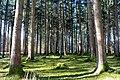 Bürmoos - Stierlingwald Motiv - 2014 03 10 - 2.jpg