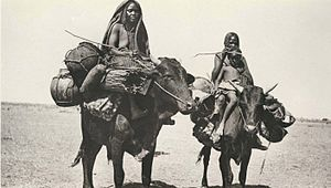 Messiria tribe -  This photo seems taken during the early 20th century but still hold as of today.  The Messiria in particular and Baggara in general travel by oxen.