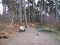 Baker Way footpath in Delamere Forest - geograph.org.uk - 1177058.jpg