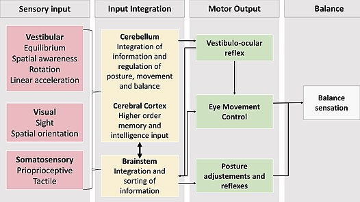 Sensory Systems  Control Systems