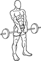 Barbell-shrugs-1.png