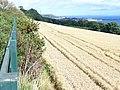 Barley Field Above Silversands Bay - geograph.org.uk - 1448080.jpg
