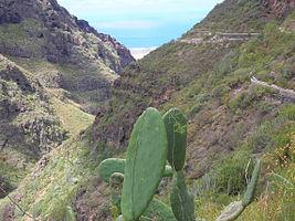 Barranco del Infierno (Tenerife)