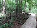 Battle Creek Cypress Swamp 20.jpg
