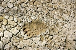Bear-footprint.jpg