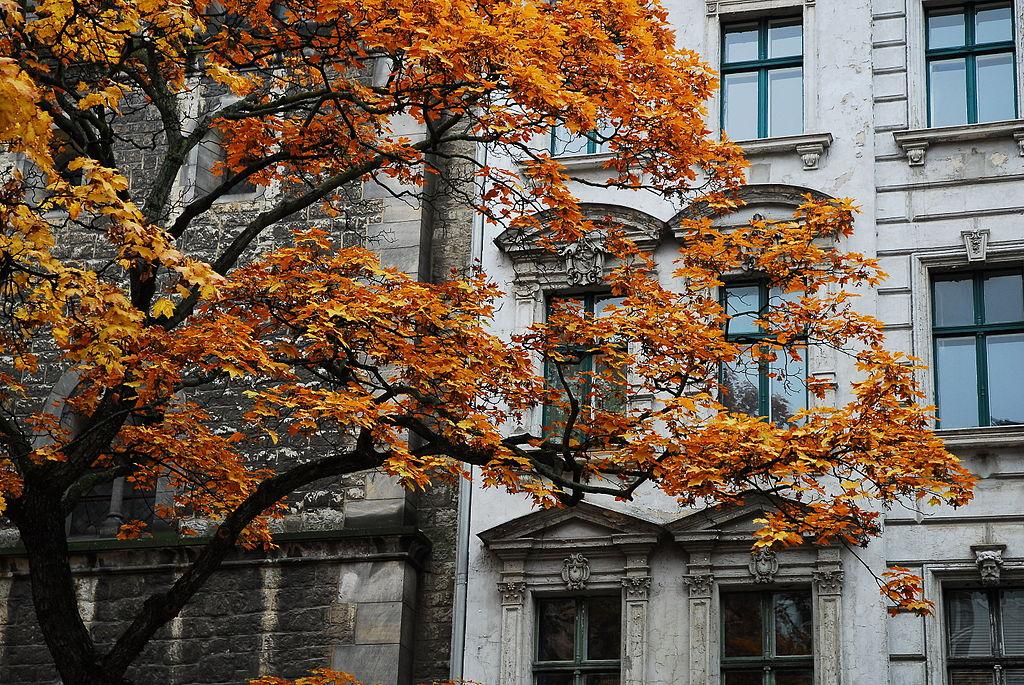 Rue et arbre à l'automne du quartier de Prenzlauer Berg  à Berlin - Photo de  Aidexxx