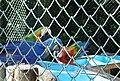 Beto Carrero Zoo - panoramio (23).jpg