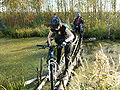 Bicycle-in-swamp.JPG