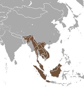 Binturong area