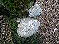 Birch Polypore (3823229926).jpg