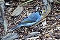Bird (3590306298).jpg