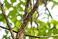Black-and-white warbler (33560538933).jpg