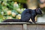 Black Squig (35302052482).jpg