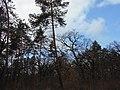 Blahovisnyi, Cherkasy, Cherkas'ka oblast, Ukraine - panoramio (18).jpg