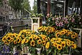 Bloemenmarkt Amsterdam.jpeg