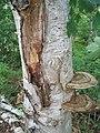 Bloomfield Provincial Park IMG 8273 (1849054968).jpg