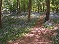 Bluebells in Sherrards Park Wood, north-east area - geograph.org.uk - 272940.jpg