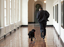 """Barack Obama running through the halls of the white house with a small black dog who looks up at him whilst running alongside"""