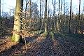 Bois de la Louvière - Livierenbos, Flobecq - Vloesberg 25.jpg