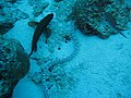 Bonaire 2011 Video (5454069351).jpg