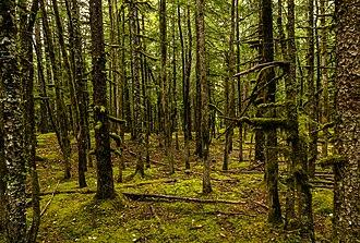 Haines, Alaska - Forest next to Davidson Glacier, near Haines.