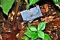 Botanic garden limbe21.jpg