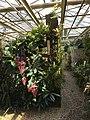 Botanische tuinen Utrecht 47.jpg