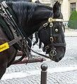 Boulonnais black horse head.jpg
