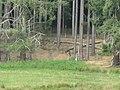 Boutissaint-wild boar--28-08-17.jpg