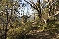 Bowral NSW 2576, Australia - panoramio (138).jpg