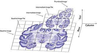 BrainMaps - Image: Brainmaps 3