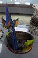 Brasile, mato grosso, waujà, diadema orizzontale con piume di kuapi, xx sec..JPG