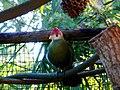 Brevard Zoo Kayak Tour - Flickr - Rusty Clark (1).jpg