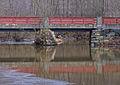 Bridge (2413653147).jpg