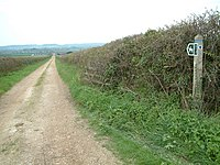 Bridleway, Dorset - geograph.org.uk - 156273.jpg