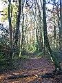 Bridleway, Wilkins's Coomb, Sandleheath, Hampshire - geograph.org.uk - 623518.jpg