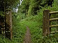 Bridleway from Pin Dale - geograph.org.uk - 1448700.jpg
