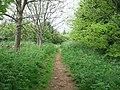 Bridleway on Ilmington Hill - geograph.org.uk - 1925119.jpg