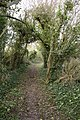 Bridleway to Muston Down - geograph.org.uk - 336074.jpg