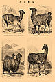 Brockhaus and Efron Encyclopedic Dictionary b33 306-2.jpg