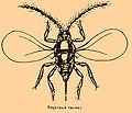 Brockhaus and Efron Encyclopedic Dictionary b76 511-2.jpg