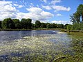 Brown Moss Nature Reserve, Shropshire.jpg