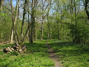 Hatley, Cambridgeshire - Buff Wood