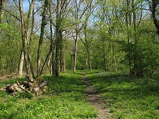 Buff Wood nature reserve in the United Kingdom