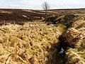 Burn near Auchincarroch Hill - geograph.org.uk - 1232803.jpg