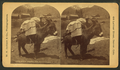 Burro packed for Montezuma, by W. H. Jackson & Co..png