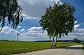 Bus stop Panzing & birches, Haselbach, Weißenkirchen an der Perschling.jpg